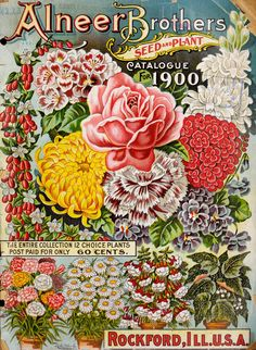 Alneer Brothers seed and plant catalogue for 1900