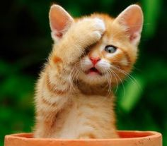 Damn, I forgot!  Ha ha! #fibromyalgia
