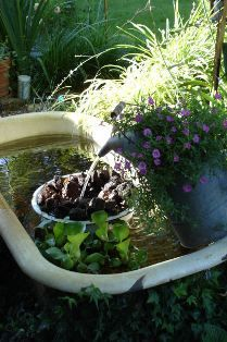1000 images about bath fish pond on pinterest old for Bathtub fish pond