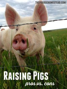 Raising Pigs: Pros & Cons | The Prairie Homestead