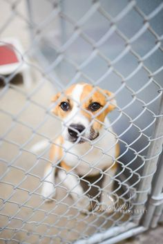 ON OFFICIAL EUTH LIST!! NOT SURE IF STILL ALIVE!! PLEASE SHARE JUST IN CASE!! Cage 48 - Skipper Impound #2730 Heeler X Male; 4 Months Brown/White Intake 7-14-14 Due Out 7-21-14  Roswell Animal Control 705 E. McGaffey Roswell, NM 88201 575-624-6722 https://www.facebook.com/RoswellUrgentAnimalsAtAnimalControl/photos/a.254112501423421.1073741867.176246809209991/308996575935013/?type=3&theater