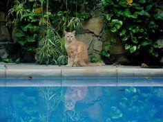 https://flic.kr/p/dMp73i | Cat and pond |           Sara