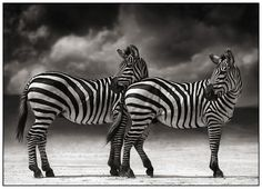 Nick Brandt Photography