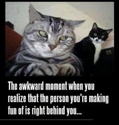 That akward moment f That akward moment funny memes animals cat cats meme lol cute. humor funny animals Source by Funniest Cat Memes, Funny Animal Memes, Funny Cat Videos, Funny Animal Pictures, Funny Photos, Funny Dogs, Funny Animals, Funny Memes, Animal Humor