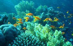 Zvířata tapeta č.: 41954 | podmořský svět, korály, ryby, egypt ...