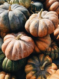 Fairytale pumpkins also known as Musque de Provence is an old time favorite for fall decor. It's orange, fine-grained flesh is ideal for baking.