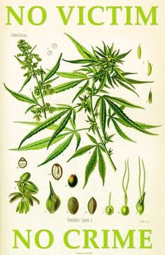 Types of weed is the nets best medical marijuana site full of best weed strains, weed types, and marijuana facts. www.typesofweed.com is free marijuana info These are some cool Funny #Marijuana Pins but #OMG check this out #Marijuana www.budhubinc.com https://www.facebook.com/BudHubInc (Like OurPage)