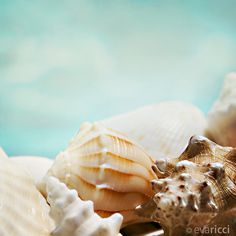 sea shells laying on the beach. You didn't buy them in a store like today.