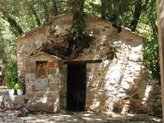 Agia Theodora, Arkadia - the church with trees growing out of it.