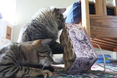 I got the idea for this new toy from Playtime for Cats: Activities and Games for Felines by Helena Dbalý and Stefanie Sigl. I love this bo...