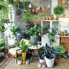 32 Favorite Home Patio Design Ideas With Best Hanging Plants Room With Plants, House Plants Decor, Plant Decor, Small Indoor Plants, Indoor Cactus, Air Plants, Plant Nursery, Hanging Plants, Patio Design