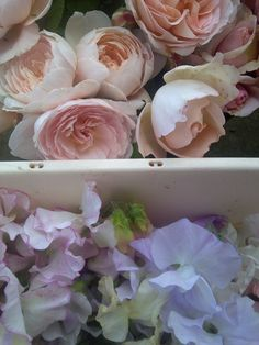sweet peas and English roses, Catkin cutting garden