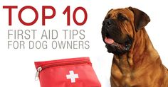 Top 10 First Aid Tips for Dog Owners. Pets can bring joy to your life, but they can also get into trouble or suffer from sudden health issues. It's important for pet owners to know some basic first aid tips to help keep pets safe and healthy. http://www.sitstay.com/blogs/good-dog-blog/140222215?utm_campaign=coschedule&utm_source=pinterest&utm_medium=SitStay%20Dogs&utm_content=Top%2010%20First%20Aid%20Tips%20for%20Dog%20Owners