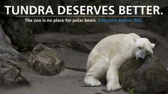 Petition · Cristián Samper: Free Tundra the Polar Bear from Bronx Zoo! · Change.org