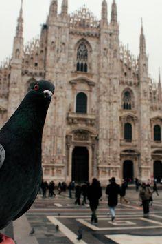 _     MilanDuomophotobombs pigeons selfie.