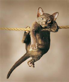 101 Bichanos, por amor aos gatos - Interna | Flickr - Photo Sharing!