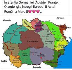 Twitter, Motion Sickness, Romania