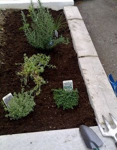 Designing An Herb Garden -  A well-designed herb garden is a thing of beauty that will serve you well for years to come. Herbs are fairly easy to grow, but there are a few things to consider before starting. Read here for more info.