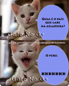 qual o país que cabe na geladeira? Cat Jokes, Funny Jokes, Gato Do Face, Life Is Strange, Cute Funny Animals, Bts Memes, Funny Images, Animals And Pets, Haha
