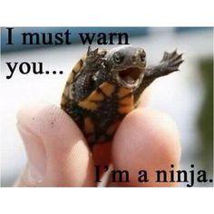 Too cute hilarious   #InnerAnimal #SpiritHoods