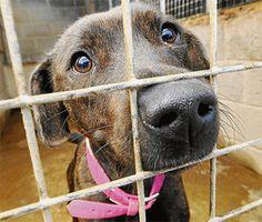 Per combattere l'abbandono, cosa fare per aiutare cani e gatti lasciati in strada - http://www.baubaunews.com/miscellanea/per-combattere-labbandono-cosa-fare-per-aiutare-cani-e-gatti-lasciati-in-strada/ http://www.baubaunews.com/wp-content/uploads/2016/05/Articolo11.jpg