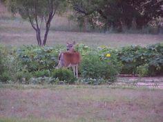 Look Who's In The Garden!!! www.laurenboehmlynch.com