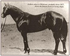 "JOE HANCOCK P-455, the ""original"" Quarter Horse versatility sire, was a 1923 15.3 hh brown stallion"