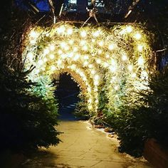 Mini #tree #tunnel with #xmas lights
