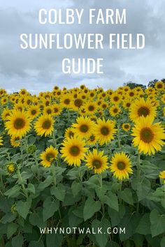 Sunflower Season, Sunflower Fields, New England Fall, New England Travel, Beautiful Places To Visit, Cool Places To Visit, Colby Farm, Travel Usa, Travel Tips