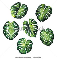 tropical Split Leaves plant botany watercolor painting pattern on white background illustration