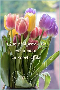 Good Morning Gif, Good Morning Flowers, Lekker Dag, Apple Wallpaper, Morning Greeting, 7 And 7, Cute Quotes, Happy Day, Greeting Cards