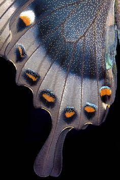 58 Ideas Photography Macro Texture Butterfly Wings For 2019 Beautiful Bugs, Beautiful Butterflies, Butterfly Kisses, Butterfly Wings, Patterns In Nature, Textures Patterns, Art Papillon, Art Watercolor, Bird Wings