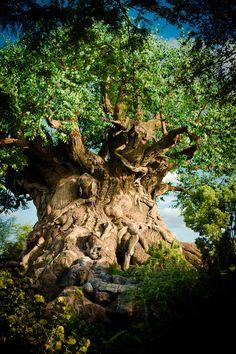 Tree of Life!!