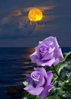 By Artist Unknown. Moon Pictures, Sunset Pictures, Beautiful Moon, Beautiful Roses, Flower Wallpaper, Nature Wallpaper, Amazing Flowers, Pretty Flowers, Rose Drawing Tattoo