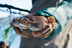 Crabbing on the Oregon Coast is a unique experience you'll remember for the rest of your life! | 21 Awesome Things To Do When You Go To Oregon