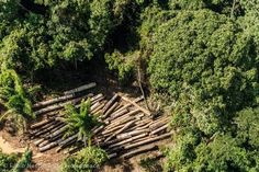 sell my logs washington, Forestry companies washington,  Forestry Consultants Washington visit at http://cedarlandforestresources.com/