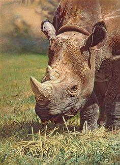 BLACK RHINO - Painting Art by Stephen Jesic - Nature Art & Wildlife Art - Wildlife in their natural habitat - Jesic Art Rhino Pictures, Animal Pictures, Wildlife Paintings, Wildlife Art, Rhino Tattoo, Giraffe, Elephant, Safari, Animals
