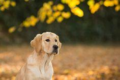 Katrina Wilson - Creative Lifestyle Dog Photographer in Bedfordshire