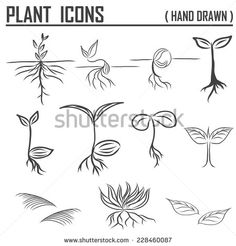 plant sprout drawing - Google Search