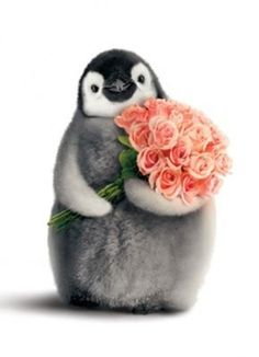 Details About Penguin With Flower Bouquet Funny Valentine's Day Card By Avanti Press Funny Valentines Cards, Funny Birthday Cards, Happy Valentines Day, Funny Cards, Penguin Art, Penguin Love, Penguin Clipart, Funny Penguin, Penguin Cartoon