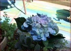 Coloring Faux Flowers with Chalk by Stephie McCarthy - Modern Design Tree Collar, Hydrangea Colors, Faux Beams, Faux Flower Arrangements, Tissue Paper Flowers, Mosaic Garden, Diy Pillows, To Color, Faux Flowers