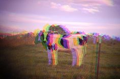 Mad Cow   Flickr - Photo Sharing!