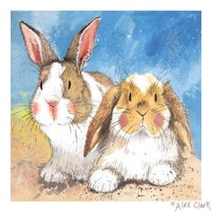 The one on the right really reminds me of my house bunny Tilly, just makes me smile