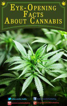 Eye-opening Facts about #Cannabis ~ The Healthy Mind Blog