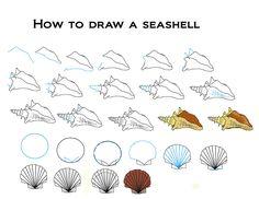 How to draw seashells
