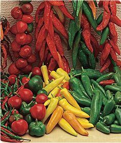 http://www.burpee.com/vegetables/peppers/hot-peppers/pepper-hot-salsa-mixture-prod000815.html    Peppers!