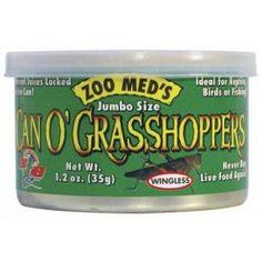 Large sized grasshoppers.