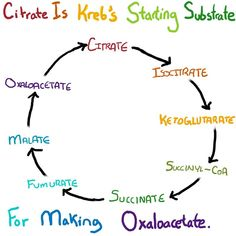 cycle - Mnemonic Also, Citrate is the starting substrate for kreb's cycle (NOT Acetyl co-A) .Kreb's cycle - Mnemonic Also, Citrate is the starting substrate for kreb's cycle (NOT Acetyl co-A) . School Info, School Study Tips, Mcat Study Tips, Study Hacks, Biochemistry Notes, Pharmacy School, Medical School, High School Biology, Biology Lessons
