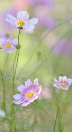 wild flowers....