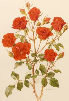 botanical vintage illustrations - Buscar con Google